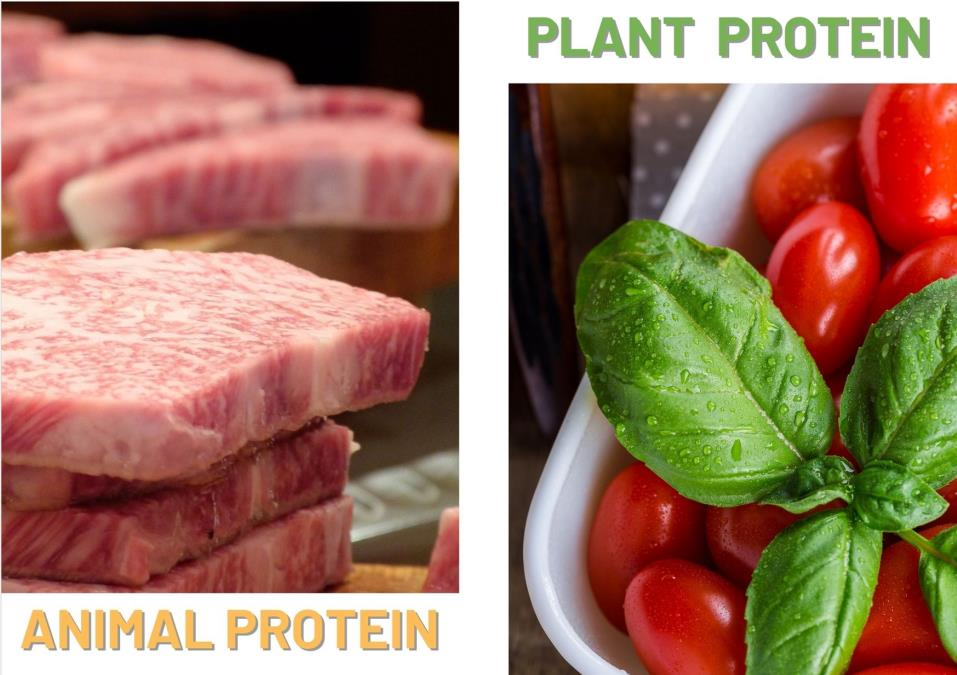 2020 vegan meat market | plant protein vs meat protein